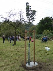 Baumpflanzung20.jpg