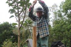 Baumpflanzung22.jpg